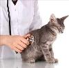Ветеринарные клиники в Мончегорске